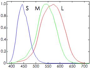 三种视锥细胞(S、M和L类型)对单色光谱刺激的反应,横坐标为光的波长,纵坐标为产生信号的强度